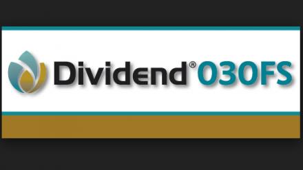 Dividend 030 FS