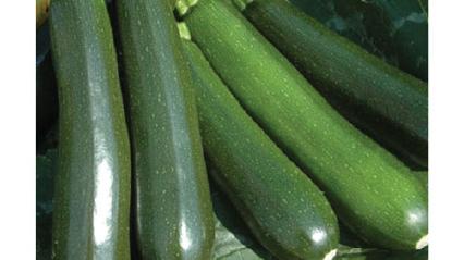 Squash Dark Green Zucchini Seeds