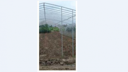 Duela Greenhouse
