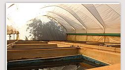 fish farm polytunnel