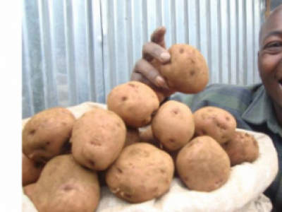 Kisima Farm Seed Potato