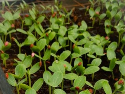Eteina Seedling Raisers