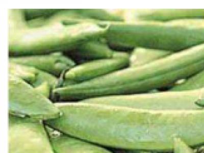Snap Peas- Sugar Lady