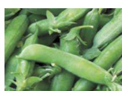 Snap Peas - Cascadia