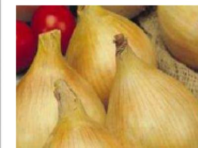 Onions - Texas Early Grano