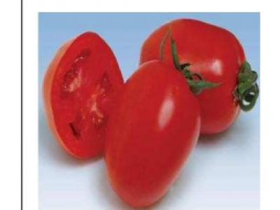 Tomato- Oxly Premium F1