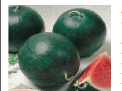 Water Melon - Sugar Baby