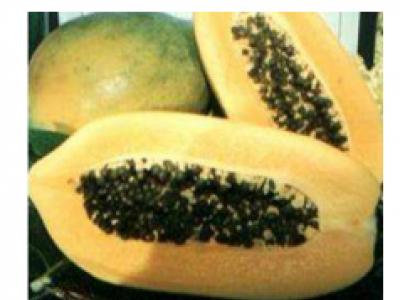 Papaya - Sinita F1