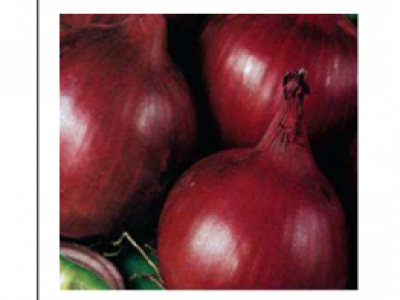 Onion- Bombay Red