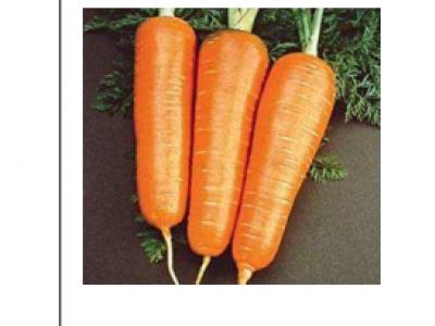 Carrots- Super Kuroda