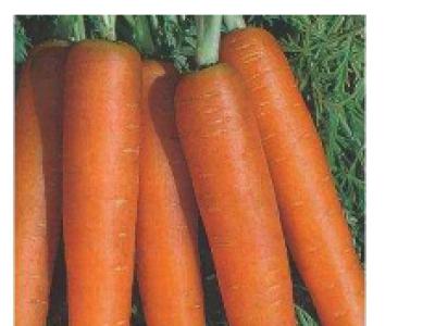 Carrots- Nantes