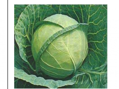 Cabbages- Blue Jays F1