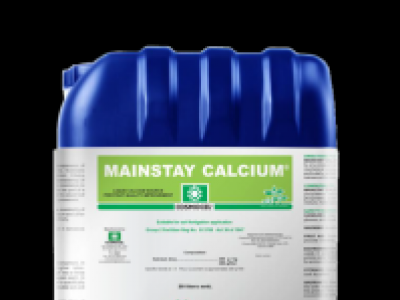 MAINSTAY CALCUIM