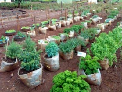 Variety of Herb seedlings