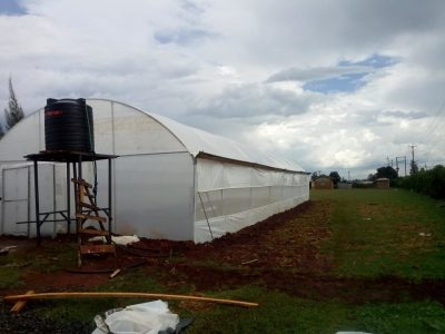 Mwanzishi Metallic Greenhouse