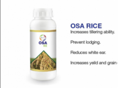 PRIVI OSA RICE.