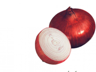 ONION - RED CREOLE