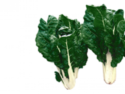 SWISS CHARD - FORDHOOK GIANT