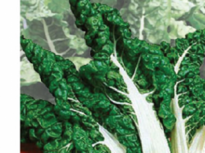 SPINACH (SWISS CHARD) FORD HOOK GIANT