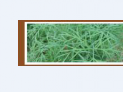 DILL-GREEN SLEEVES