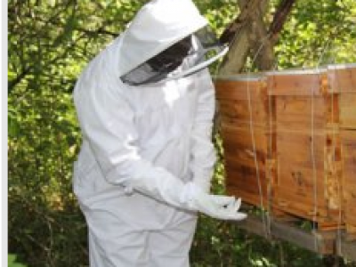 The CAB hive