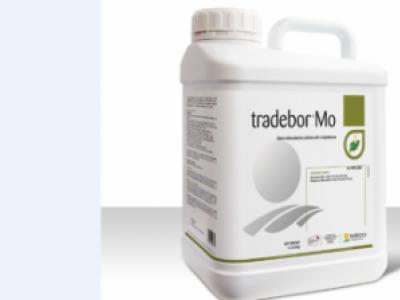 Tradebor Mo