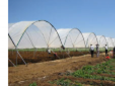 Farm polytunnel