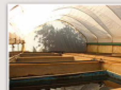 Fish farm polytunnel