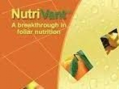 Nutrivant High N(31-8-7+Me+Fv