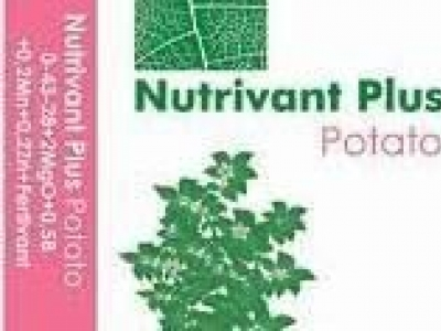 Nutrivant Potato(0-19-23+1.2Mg+0.5B +Mn+Zn+FV)