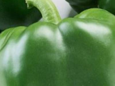 GREEN PEPPER SUPERBELL