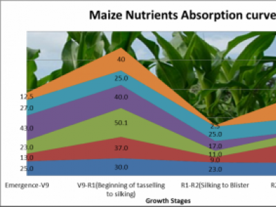 MAIZE NUTRIENTS ABSORPTION CURVE