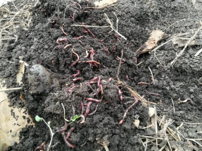 Soil Conditioners/Improvers