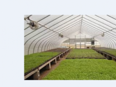 Benefits of Greenhouse Crop Production.
